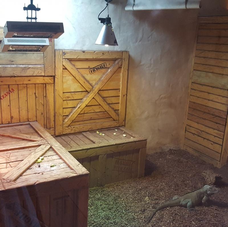 CH-1500s providing comfort heat to an iguana enclosure